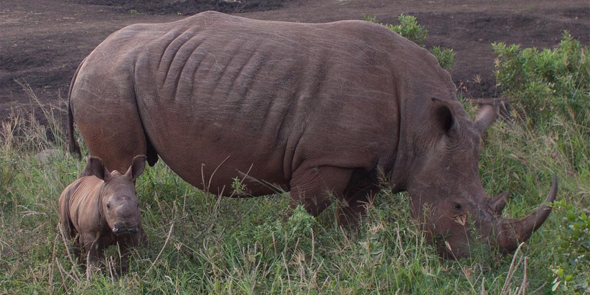 Donation_Rhino